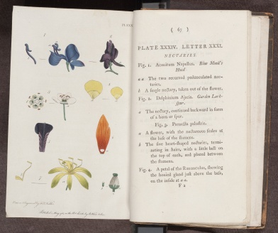 Letters on the Elements of Botany, hand-coloured engraved plate to illustrate letter thirty-one