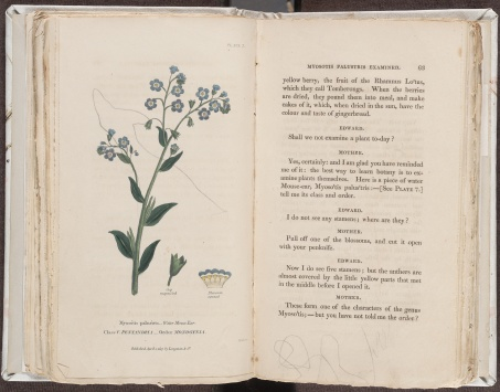 Conversations on Botany, Myosotis palustris, Plate 7