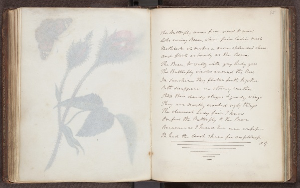 Miss Murray's Album, hand-written poem facing elaborate pencil drawing and butterfly specimen