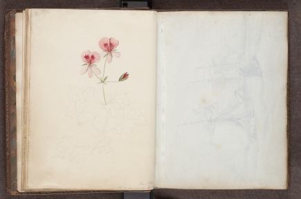 Miss Murrary's album, unfinished floral watercolour