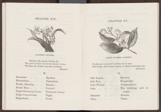 The Illustrated Language of Flowers, letters N and O