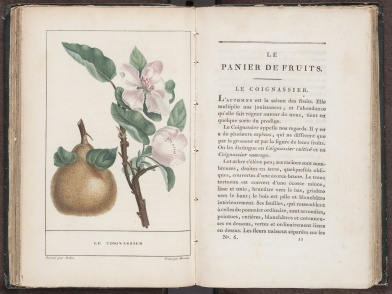 Le Panier de Fruits, Illustration and Page 161